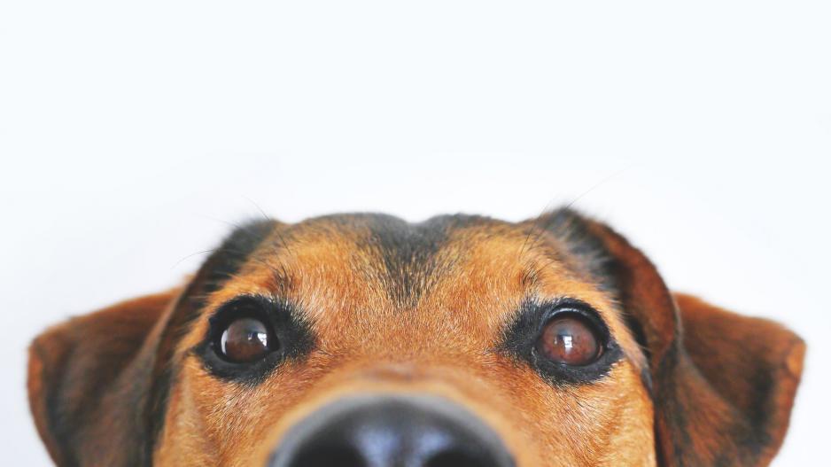 1η Γιορτή Υιοθεσίας Σκύλου στην Αλεξανδρούπολη