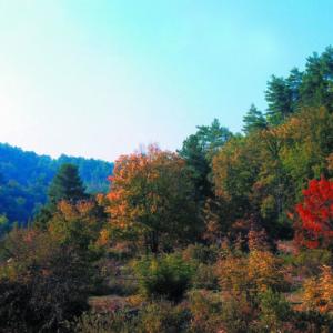 Αποτράπηκε ο αποχαρακτηρισμός τμήματος NATURA του Εθνικού Πάρκου Δαδιάς