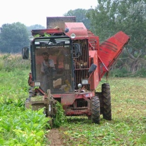 Κρίσιμος ο Αύγουστος για τιμές και απορρόφηση της παραγωγής καλοκαιρινών φρούτων