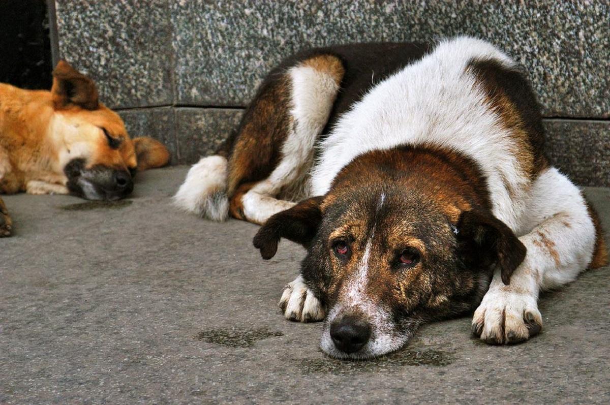 Διανομή ξηράς τροφής σε εθελοντές φιλόζωους για τα αδέσποτα σκυλιά στην Αλεξανδρούπολη