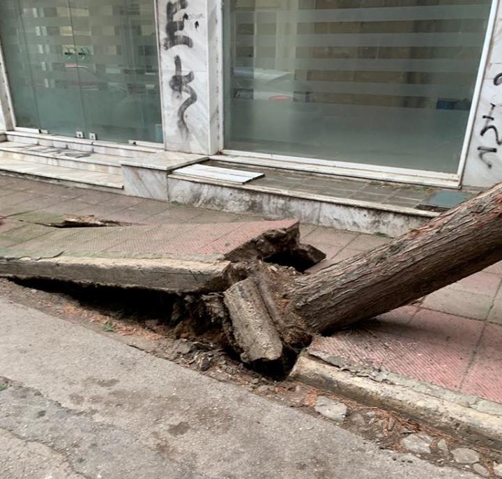 Πτώσεις δέντρων και ζημιές στην Αλεξανδρούπολη, οδηγίες - συστάσεις προς τους πολίτες
