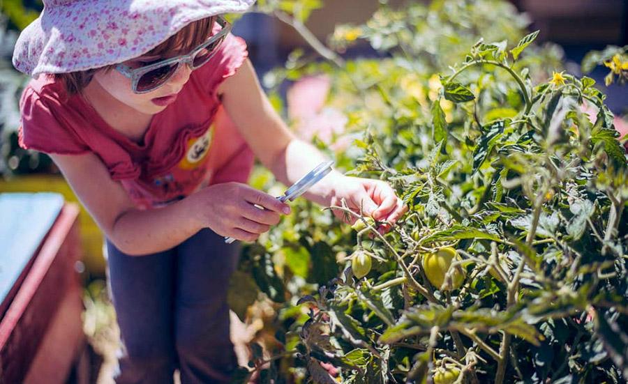 Εκπαιδευτικοί λαχανόκηποι σε σχολικές αυλές της Αλεξανδρούπολης!