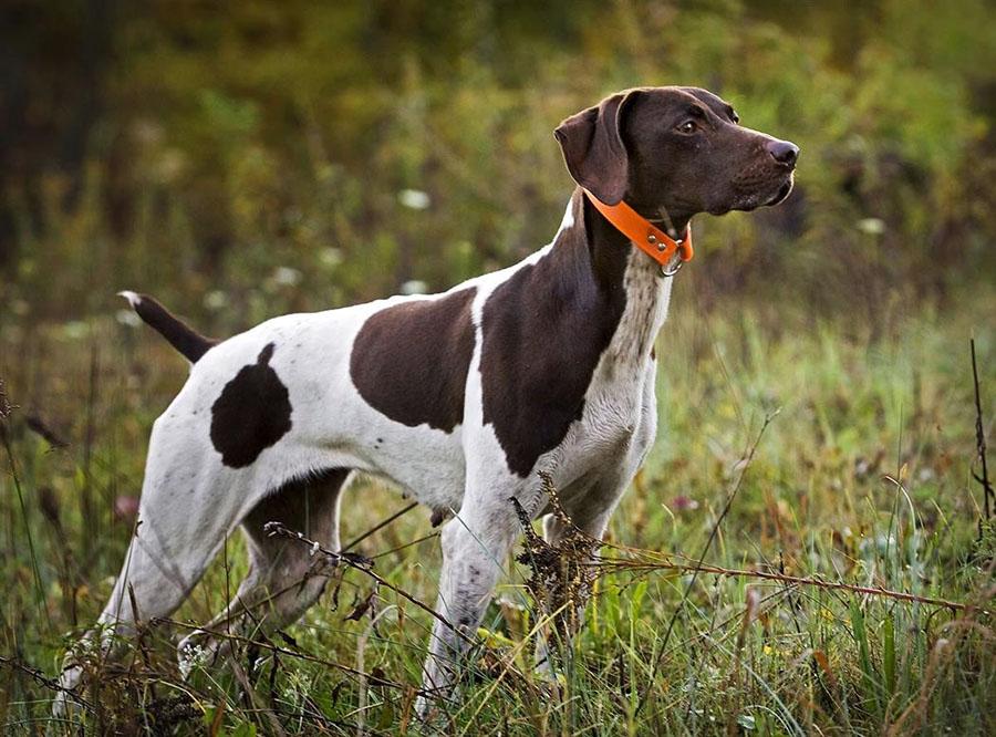 300 πολίτες ζητούν έλεγχο για την προστασία των κυνηγετικών σκύλων