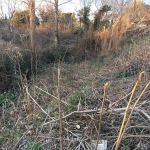 Έβρος: Απαγόρευση κυκλοφορίας στα δάση λόγω υψηλής επικινδυνότητας πυρκαγιάς