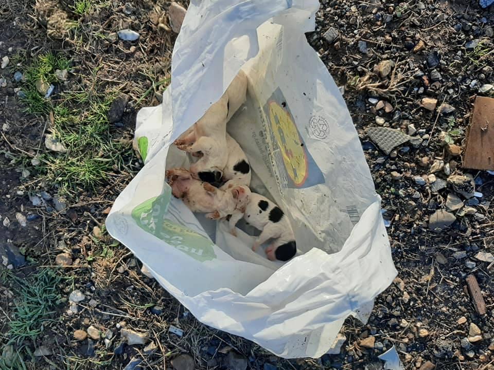 Κουτάβια λίγων ωρών βρέθηκαν νεκρά μέσα σε σακούλα στον Απαλό