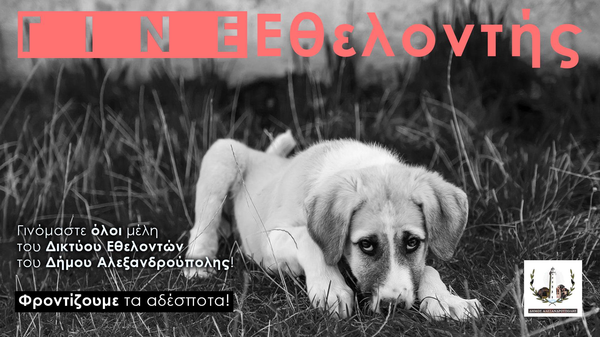 Δήμος Αλεξανδρούπολης: Η διαδικασία για τη βεβαίωση για τη σίτιση αδέσποτων