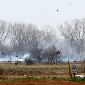 Αποζημιώσεις για τις καταστροφές στις καλλιέργειες των Καστανεών ζητά ο Χ. Δερμεντζόπουλος
