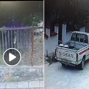 Σοκ στο Σουφλί: Οδηγός περνάει με το αμάξι του πάνω από σκύλο !
