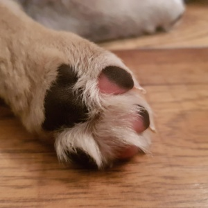 Αδέσποτο στην Ελλάδα, σκύλος θεραπείας στη Γερμανία!
