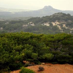 Πρόταση για την ανακήρυξη του δάσους Μαύρης Πεύκης σε μνημείο της φύσης